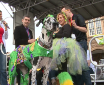 Gabe, a Great Dane, was the King Winner for the Beggin' Pet Parade costume contest.